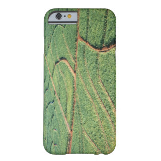 Sugar Cane Field Barely There iPhone 6 Case