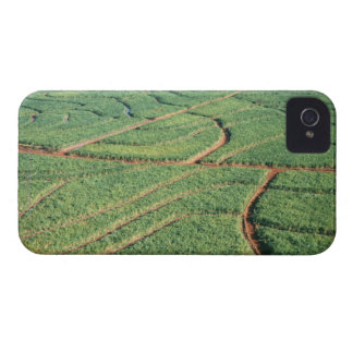 Sugar Cane Field Case-Mate iPhone 4 Case