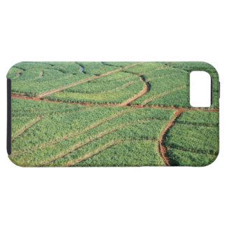 Sugar Cane Field iPhone 5 Covers