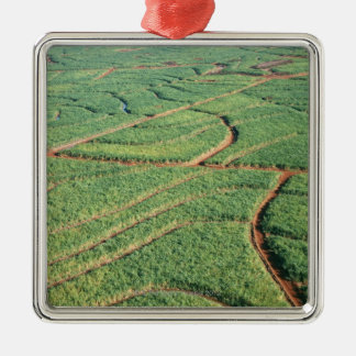 Sugar Cane Field Silver-Colored Square Decoration