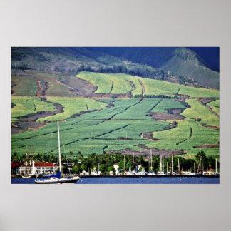Sugar Cane Fields - Lahaina, Maui Poster
