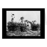 Sugar Cane Harvest in Hawaii 1917 Greeting Card