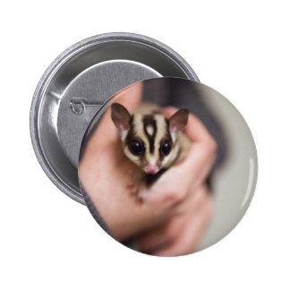 Sugar Glider button