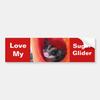Sugar Glider in Orange Hanging Bed Bumper Sticker