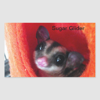 Sugar Glider in Orange Hanging Bed Rectangular Sticker