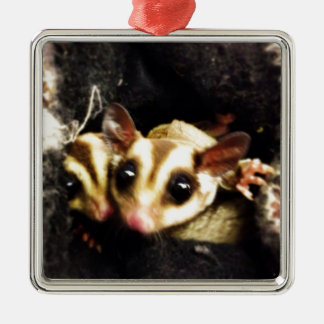 sugar glider photo design christmas ornament