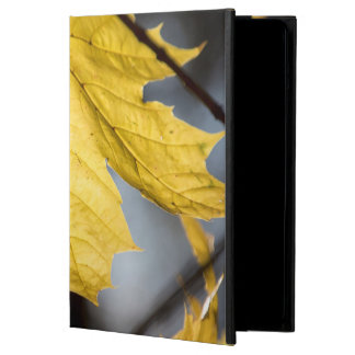 Sugar maple, fall iPad air cover