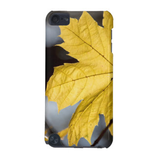 Sugar maple, fall iPod touch (5th generation) cover