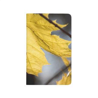 Sugar maple, fall journal