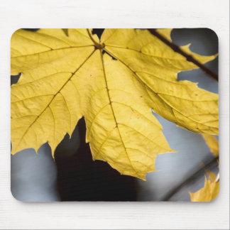 Sugar maple, fall mouse mat