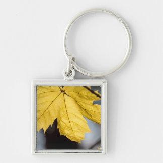 Sugar maple, fall Silver-Colored square key ring