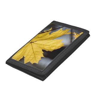 Sugar maple, fall tri-fold wallet
