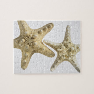 Sugar starfish on a thorny starfish jigsaw puzzle