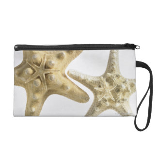 Sugar starfish on a thorny starfish wristlet