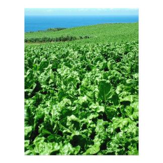 Sugarbeet field 21.5 cm x 28 cm flyer
