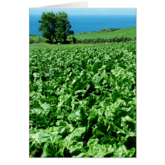 Sugarbeet field card