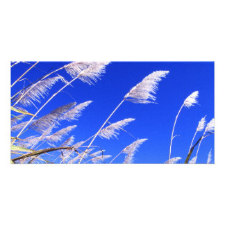 Sugarcane field personalized photo card