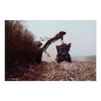 Sugarcane harvest poster