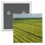 Sugarcane Plantations, Guyana Pinback Buttons