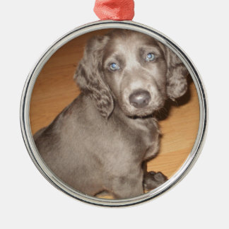 Suki 8 wks old 1st night home (6).JPG Christmas Ornament