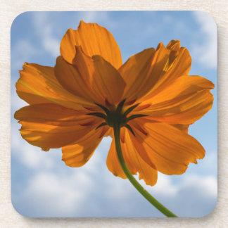 Sulphur Cosmos Orange Flower Hard Plastic Coasters