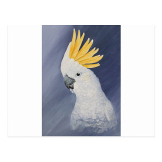 Sulphur crested Cockatoo gift for the parrot lover Postcard