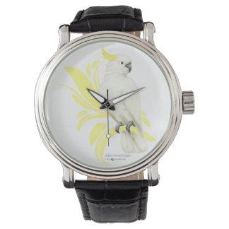 Sulphur Crested Cockatoo Watch