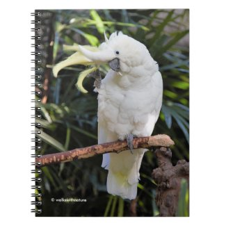 Sulphur-Crested Cockatoo Waves at the Photographer Notebook
