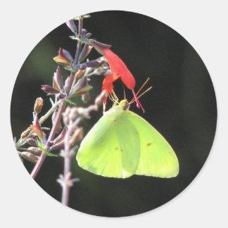 Sulphur on Salvia Sticker