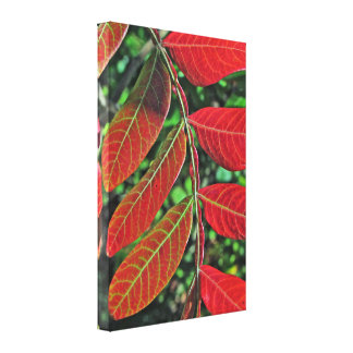 Sumac Leaves In Autumn Stretched Canvas Print