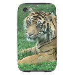 Sumatra Tiger On iPhone 3 Case-Mate Tough