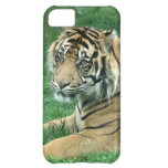 Sumatra Tiger On iPhone 5 Barely There Cover For iPhone 5C