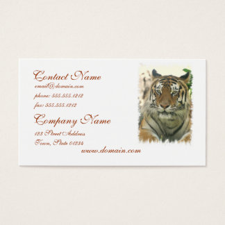 Sumatran Tiger Business Cards