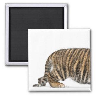 Sumatran Tiger cub 2 Magnet