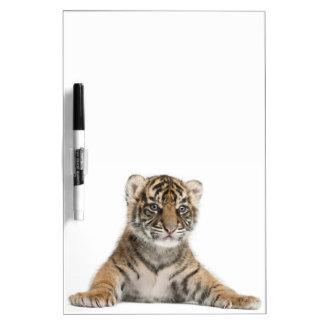 Sumatran Tiger cub Dry Erase Board