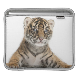 Sumatran Tiger cub iPad Sleeve