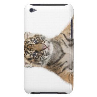 Sumatran Tiger cub iPod Touch Covers