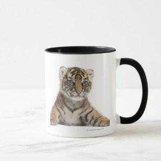Sumatran Tiger cub - Panthera tigris sumatrae (3 Mug