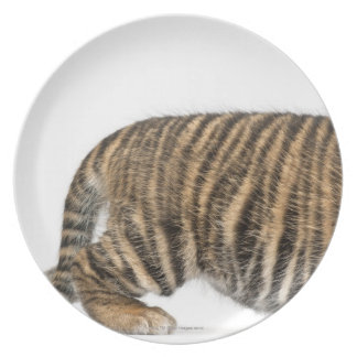 Sumatran Tiger cub - Panthera tigris sumatrae (3 Plate