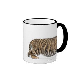 Sumatran Tiger cub - Panthera tigris sumatrae (3 Ringer Mug