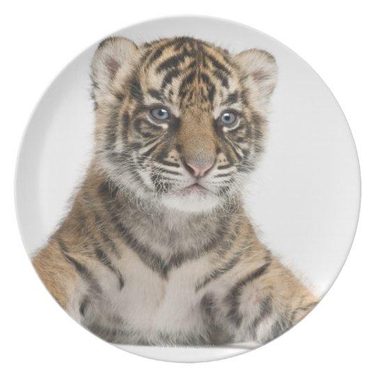 Sumatran Tiger cub Plate
