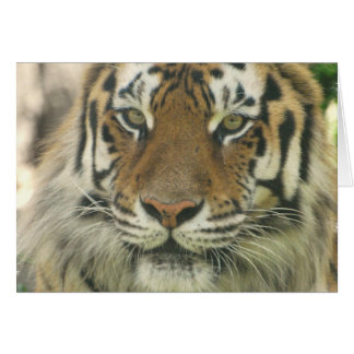 Sumatran Tiger Greeting Cards