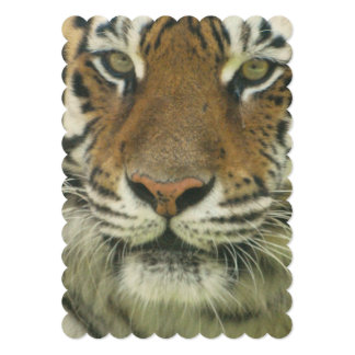 "Sumatran Tiger 5"" X 7"" Invitation Card"