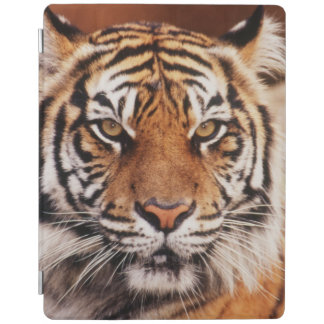 Sumatran Tiger, Panthera tigris iPad Cover
