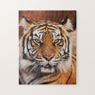 Sumatran Tiger, Panthera tigris Jigsaw Puzzle