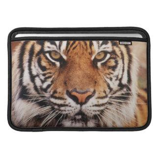 Sumatran Tiger, Panthera tigris Sleeve For MacBook Air