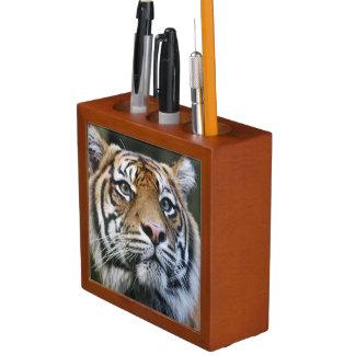 Sumatran Tiger (Panthera tigris sumatrae) Desk Organiser