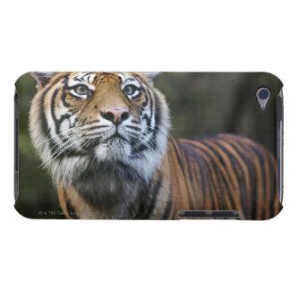 Sumatran Tiger (Panthera tigris sumatrae) in iPod Case-Mate Case
