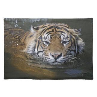 Sumatran tiger, Panthera tigris sumatrae Placemat