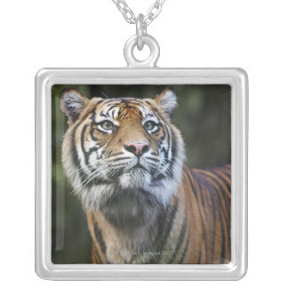 Sumatran Tiger (Panthera tigris sumatrae) Silver Plated Necklace